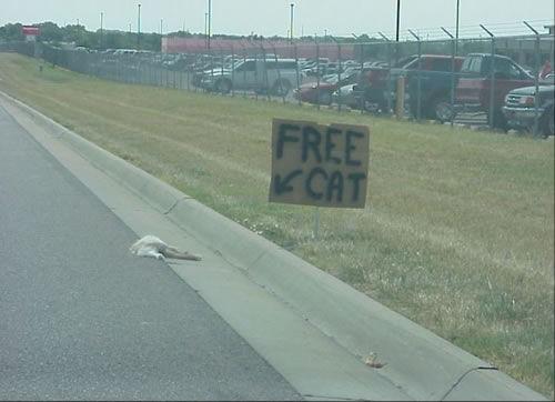 FreeCat