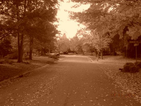 November 9-2008 018
